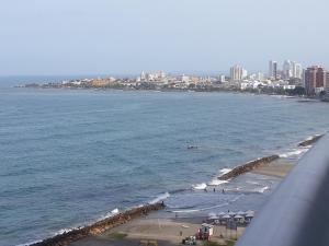 Palmetto Eliptic Bahia