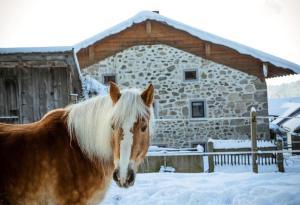 Pension und Ferienwohnungen Pferdehof-Haug