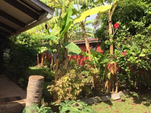 Korina's Guesthouse, Affittacamere  Hanga Roa - big - 44