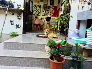 Xiao Shi Zi Hostel