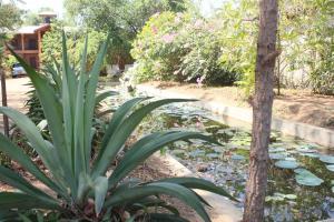 Guruge Villa Habarana, Inns  Sigiriya - big - 21