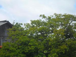 Rancho Assel, Загородные дома  Campina Grande do Sul - big - 13