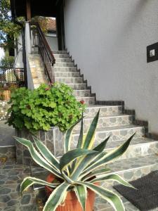 Apartments Dedic - фото 21