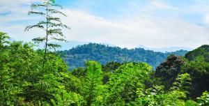 Hill Cottage, Priváty  Kandy - big - 26
