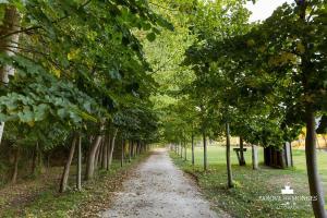 Parque dos Monges, Zelt-Lodges  Alcobaça - big - 7