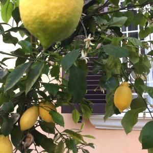 Gianicolo Penny's Garden
