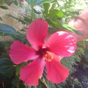 Casa de Los Suenos B&B Coronado Panama, Panziók  Playa Coronado - big - 72