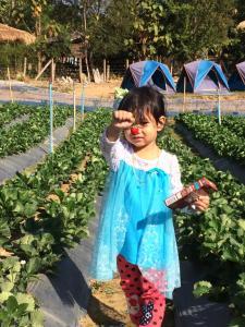 Chiang Dao Story Camp, Vendégházak  Csiangdau - big - 36