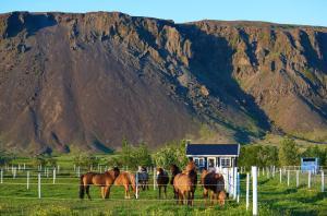 Akurgerði Guesthouse - Hveragerði