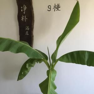 Jing Pu Plant Theme Hostel, Хостелы  Jinghong - big - 74