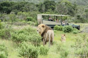 Sibuya Game Reserve and Lodge, Resorts  Kenton on Sea - big - 59