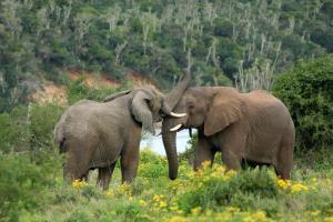 Sibuya Game Reserve and Lodge, Resorts  Kenton on Sea - big - 58