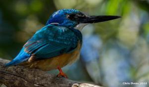 Sibuya Game Reserve and Lodge, Resorts  Kenton on Sea - big - 56