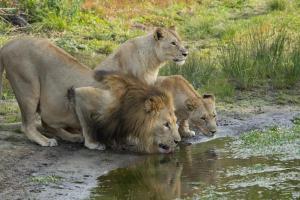 Sibuya Game Reserve and Lodge, Resorts  Kenton on Sea - big - 57