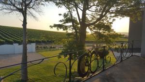 Dieu Donne, Guest houses  Stellenbosch - big - 20