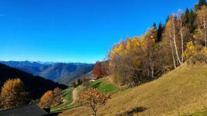 Il Cardo Trentino