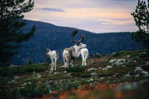 obrázek - Lapland Senses