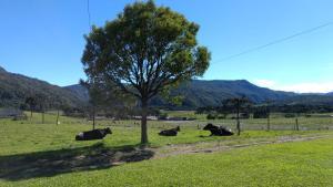 obrázek - Mudança de hábitos campo rural