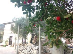 Villa Del Maestro