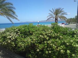 obrázek - Hotel Petras Beach