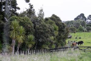 Totara Hill, Penzióny  Kerikeri - big - 9