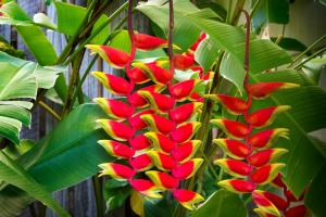 Heliconia on Kara, Case vacanze  Airlie Beach - big - 24