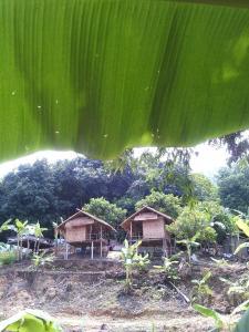 Mae Pom Homestay, Гостевые дома  Ban Muang - big - 8