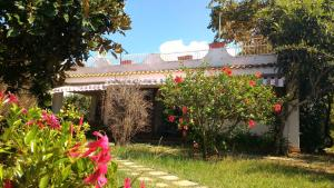 Villa Margherita, Holiday homes  Capo Vaticano - big - 11