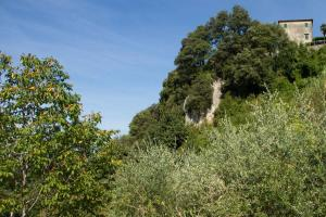 Lucca Country Rentals, Penzióny  Coreglia Antelminelli - big - 46