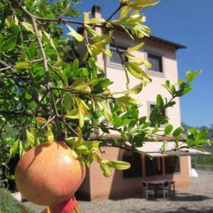 Il Casone - Valle Dell'Aniene, Country houses  Anticoli Corrado - big - 79