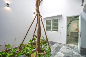 DaNang Cocoon Studio