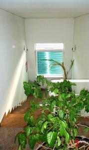 Motel Vila Palma - фото 15