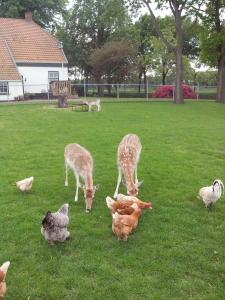 bed en breakfast westerwolde