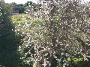 Casa Vacanze Mandorlo in Fiore