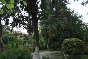 Отель Смоковница - фото 26