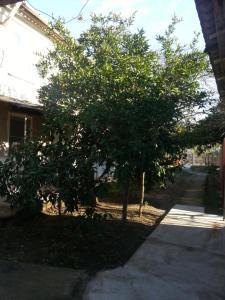 Гостевой дом Южная Пальмира - фото 17