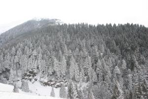 Azra Dağ Evi̇, Шале  Güzelce - big - 36