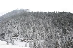 Azra Dağ Evi̇, Horské chaty  Güzelce - big - 36