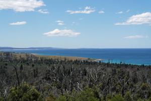 Black Wattle Views