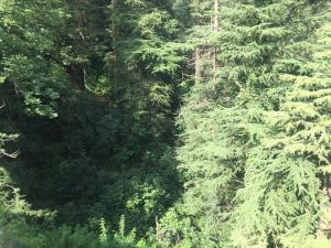 Offthecity Camp Kyar, Luxury tents  Shimla - big - 48