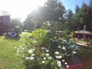 Sol del Paraíso, Case vacanze  Villarrica - big - 16