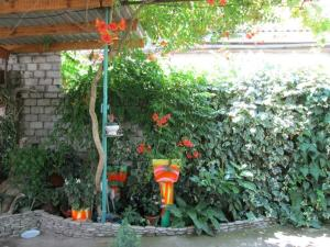 Гостевой дом Elena - фото 22