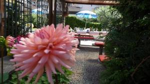 Osteria Ticino, Hotels  Ascona - big - 31