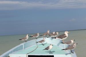 Tierra Mia, Hotels  Holbox Island - big - 34