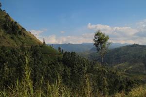 Cool Mount Guest, Homestays  Nuwara Eliya - big - 15