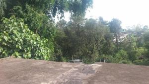 Daya cottage, Magánszobák  Dharamszala - big - 5