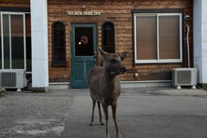 obrázek - The Deer Park Inn