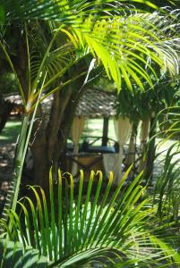 Casa Girassois, Apartmány  Pipa - big - 12