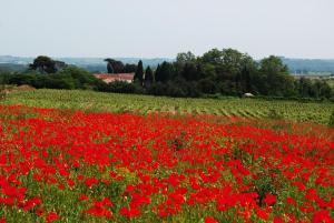 Domaine Saint Ferreol