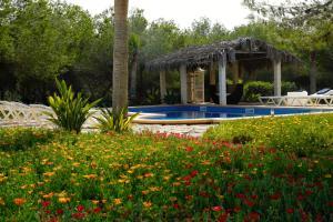 Villa Leonor, Виллы  Эс-Кало - big - 34
